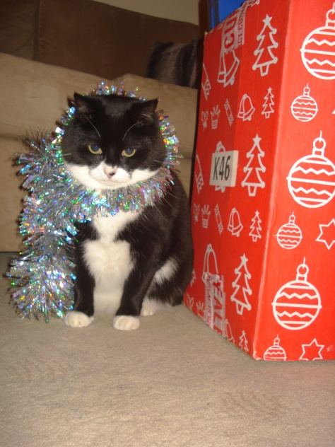 Lola kitteh IS looking forward to Santy.... :)